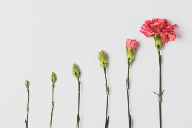 Blommor i olika stadier av utveckling